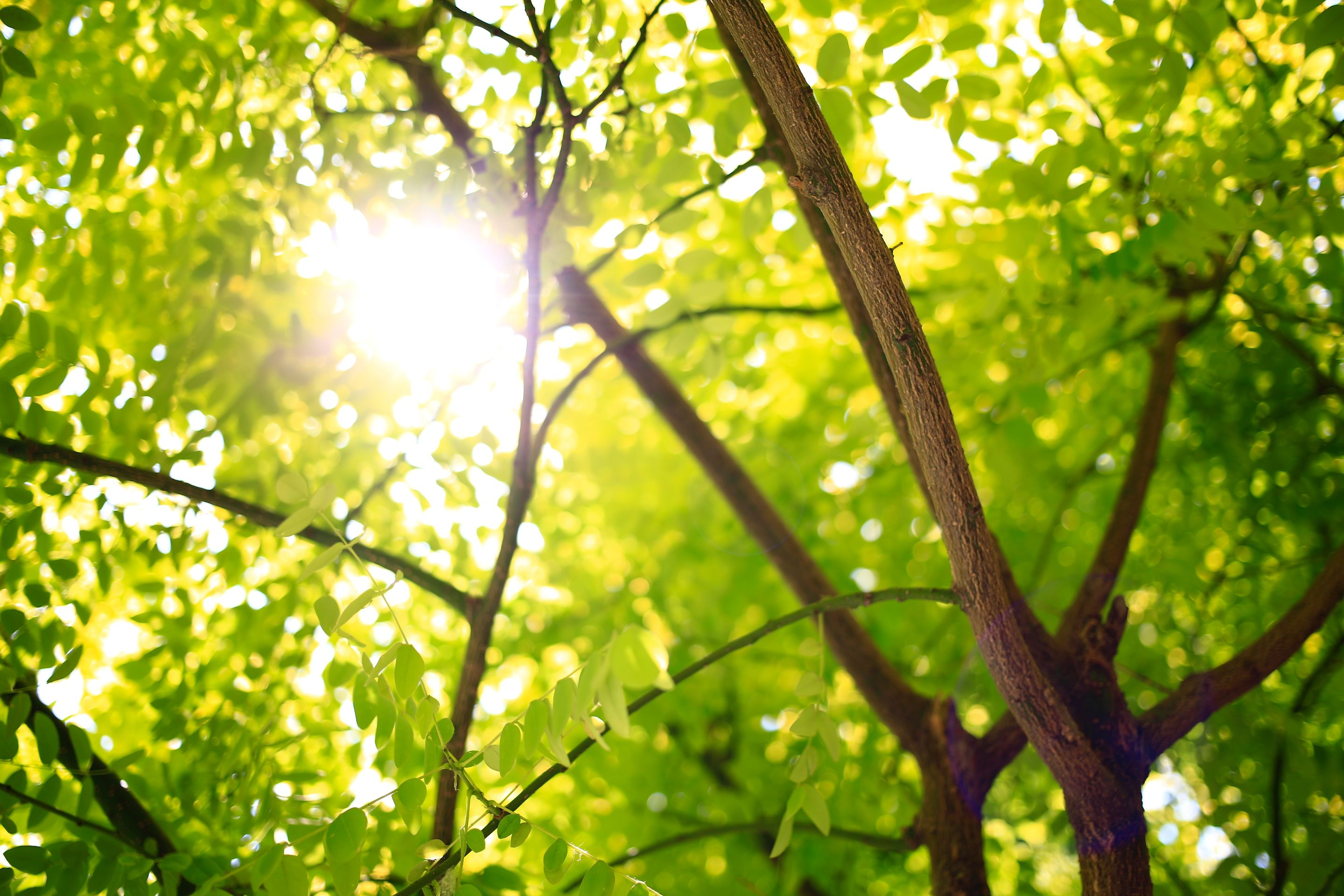 tree branches with sun