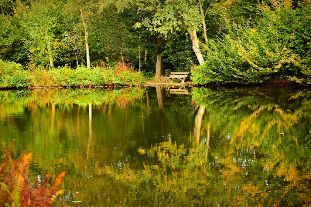 bench by still pond in wooded area